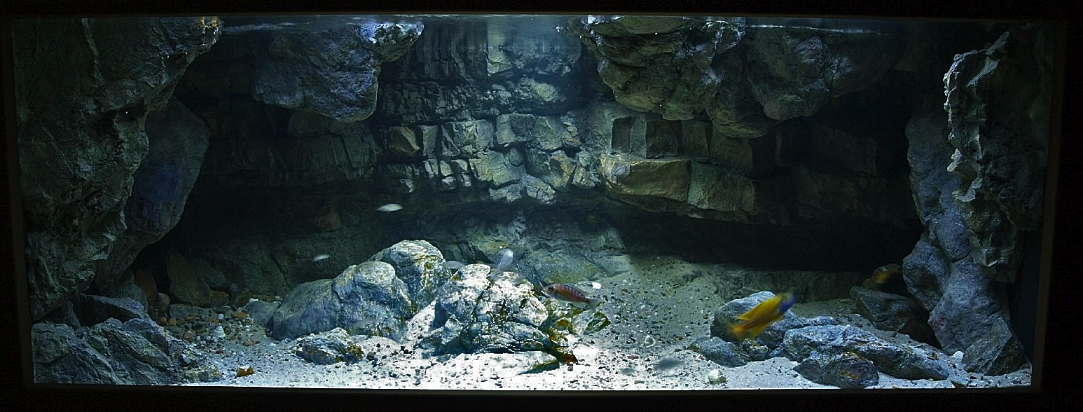 aquarium 250x80x60 cm ca 1200 liter 12 mm glas onlineshop aquarienbau. Black Bedroom Furniture Sets. Home Design Ideas