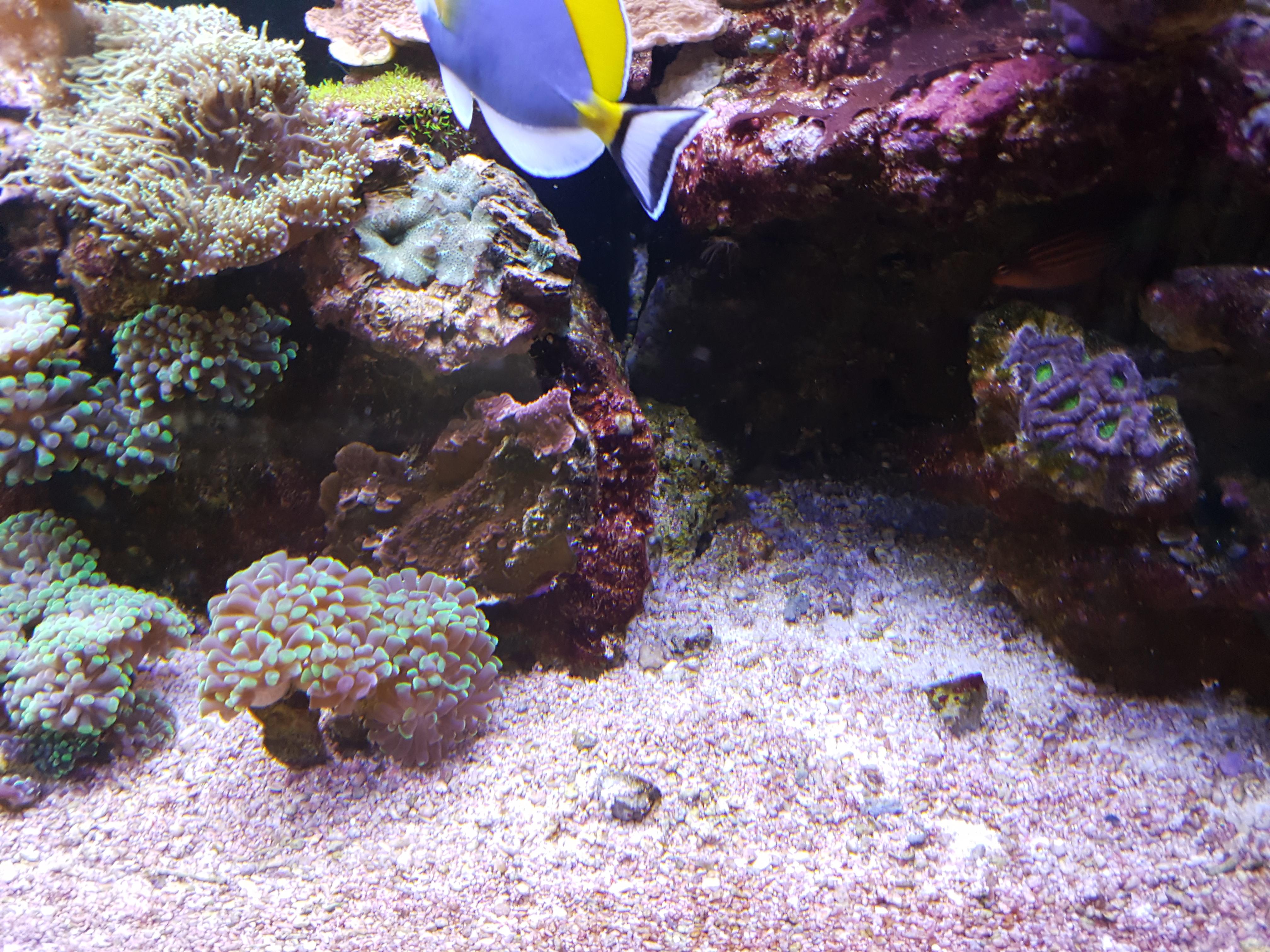 Steine für Meerwasseraquarien